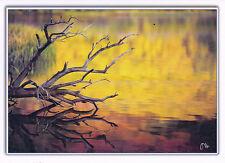 "Blank Notecard - ""AUTUMN REFLECTION"" North Lake, Ca. - by Dan Holmes!"