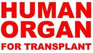Vinyl Decals (2) Human Organ For Transplant Medical Hospital Funny Cooler Lunch