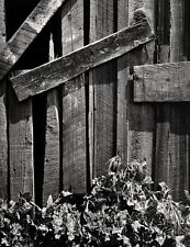 1932/63 Vintage 16x20 OLD WOOD & THISTLES Plant Abstract Photo Art ~ ANSEL ADAMS