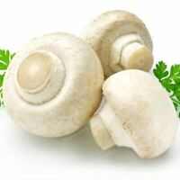 100 Pcs Delicious White Mushroom Seeds Green Vegetables Bonsai Seeds Very Easy T
