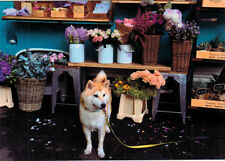 HUSKY DOG IS EMPLOYED BY FLORIST Modern Russian postcard