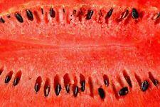 100% Watermelon Seed Citrullus Vulgaris Artisanal Natural Essential Carrier Oil