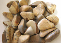 *THREE* Picture Jasper Tumbled Stone 35-45mm QTY3 Healing Crystal Heal Past