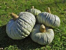 Pumpkin BERRETTINA PIACENTINA-Pumpkin Seeds-YUMMY ITALIAN-20 LARGE SEEDS.