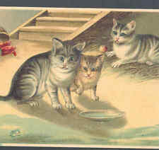 CURIOUS CATS WATCH FROG HOPPING TOWARD THEIR MILK DISH,VINTAGE POSTCARD