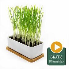 Katzengras Schale aus Keramik - komplett DIY Pflanz-Set mit Samen + Erde + Topf