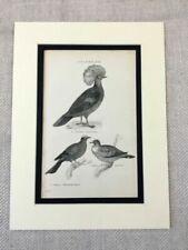 Engraving Birds Original Art Prints