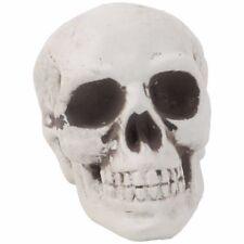 1Pc Plastic Human Skull Decor Prop Skeleton Head Halloween Coffee Bars Ornament