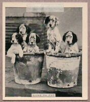 2 Clay Pots Full Of Puppy Dogs 1930s Trade Ad Card