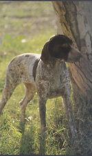 1979 Print German Short-haired Pointer Waits Command Bird Dog Birders Hunting