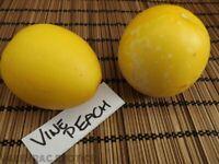 Vine Peach - Pfirsich Melone - Mango Melone - 5+ Samen - Saatgut - ERTRAGREICH!