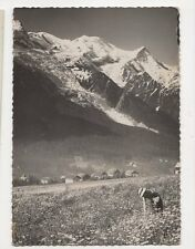 Chamonix Champs de Fleurs & Mont Blanc RP Postcard 321a