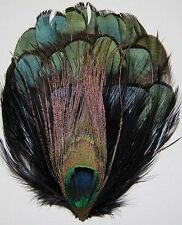 ONE FEATHER PAD - Black Pheasant & Hackle w/ Peacock EYE (New B1); Pads/Hats/Art