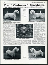 SEALYHAM TERRIER OUR DOGS 1946 DOG BREED KENNEL ADVERT PRINT PAGE VENTMOOR