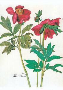 Postkarte: Albrecht Dürer - Pfingstrosen / 1505