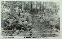 ".ST LEONARD, ""GREENHILLS"" MT , VICTORIA THE ROSE SERIES P 2246 VINTAGE POSTCARD"