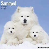 Samoyed Calendar 2020 Premium Dog Breed Calendars