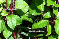 Red Malabar Spinach - Lal Pui Shak, Bachhali, Bertalha, Alugbati - 10 Seeds