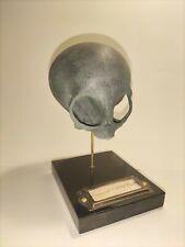 Cabinet De Curiosité Oddities Réplique Crâne Extraterrestre