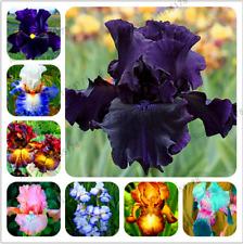 50 Pcs Seeds Plants Iris Perennial Garden Flowers Floresling Bonsai Outdoor New
