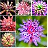 50pcs Succulent Seeds Lithops Rare Living Stones Plants Cactus Home Plant Hot
