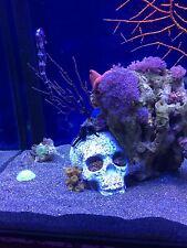 Marine artificial live rock reef coral tank aquarium functional porous skull