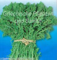 🔥  Shungiku Asiagemüse gesund und lecker essbare Blüten 50 frische Samen Balkon