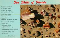 Postcard Sea Shells Of Florida