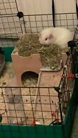 :NEW LOWER PRICE:::: (MY ORIGINAL DESIGN)  CAGE SIZE  GUINEA PIG CASTLE /SHELTER