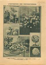 Exposition Chrysanthèmes Oeuillets Roses Garland chrysanthemum 1906 ILLUSTRATION