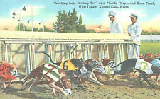 "Postcard-""Breaking from Starting Box"", FL Greyhound Race Track,Miami Kennel Club"