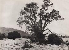 1908/52 Vintage WESTERN TEXAS Outdoor Landscape 11x14 Photo Art ~ ERWIN E. SMITH