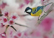 Folding card: Bluetit on a Cherry Blossom Branch-BLUE this in the Cherry Tree