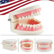 1pc Dental Flesh Pink Gums Standard Tooth Teeth Model Teach for Teacher -US Ship