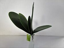 Artificial Orchid Leaves Bush Green - 24cm - Fake Flower Leaf
