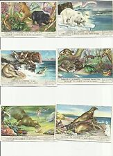 ITALY Liebig trading cards S 1586 F 1581  Carnivores and Pinnipeds CARNIVORI E P