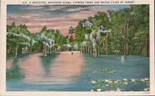 Vintage Linen Postcard Southern Scene Cypress Trees And Water Lilies Florida