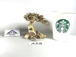 Mini Bonsai Driftwood Aquarium Moss Tree for Shrimp Freshwater - Bulk AS9