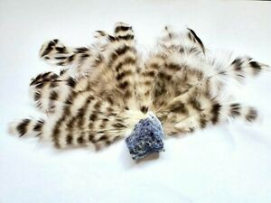Cruelty-Free Black and White Dominique Chicken Feathers (10 pack) Sustainable