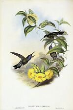 """1990 Vintage HUMMINGBIRD #60 """"BLUE THROATED CAZIQUE"""" GOULD COLOR Lithograph"""