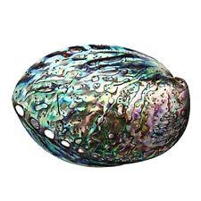 10 12cm Large Rainbow Abalone Shell Charm Beach Seashell Car Office House W1d6
