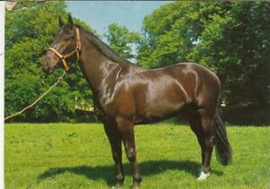 Tiere: Ein schönes Pferd gl1987 G5325