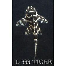 L333 Tiger  Pleco
