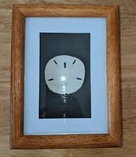 Vtg Wood Shadowbox Framed Sand Dollar Beach Figi Giftware Nautical Wall Decor