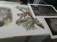 Lot of 4 limited edition prints large cats, lion tiger leopards