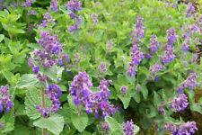 Light H5 (-15 to -10 °C) Plants & Seedlings