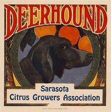 Sarasota Florida Deerhound Dog Puppy Orange Citrus Fruit Crate Label Print