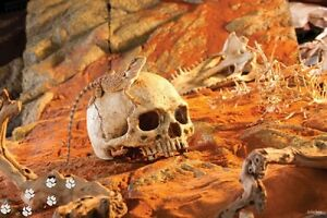 Exoterra Primat Skull Dekoschädel Terraristik Reptilien Deko Schädelnachbildung