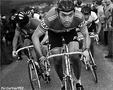 EDDY MERCKX 1977 RETRO TEAM FIAT POSTER