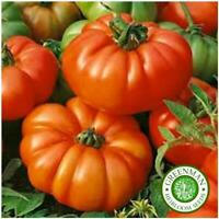 25 Graines de Tomate Marmande. Semences légume d'héritage. Heirloom Seeds.